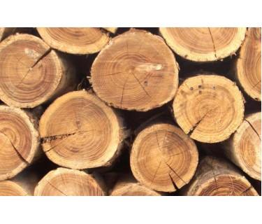 Что такое массив дерева?