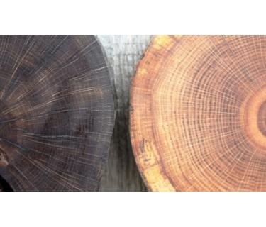 Какое дерево лучше выбрать для изготовления мебели